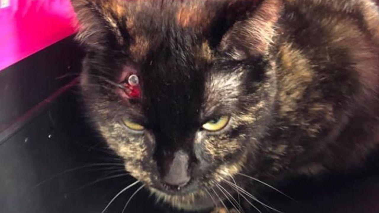Kat beschoten in Den Bosch