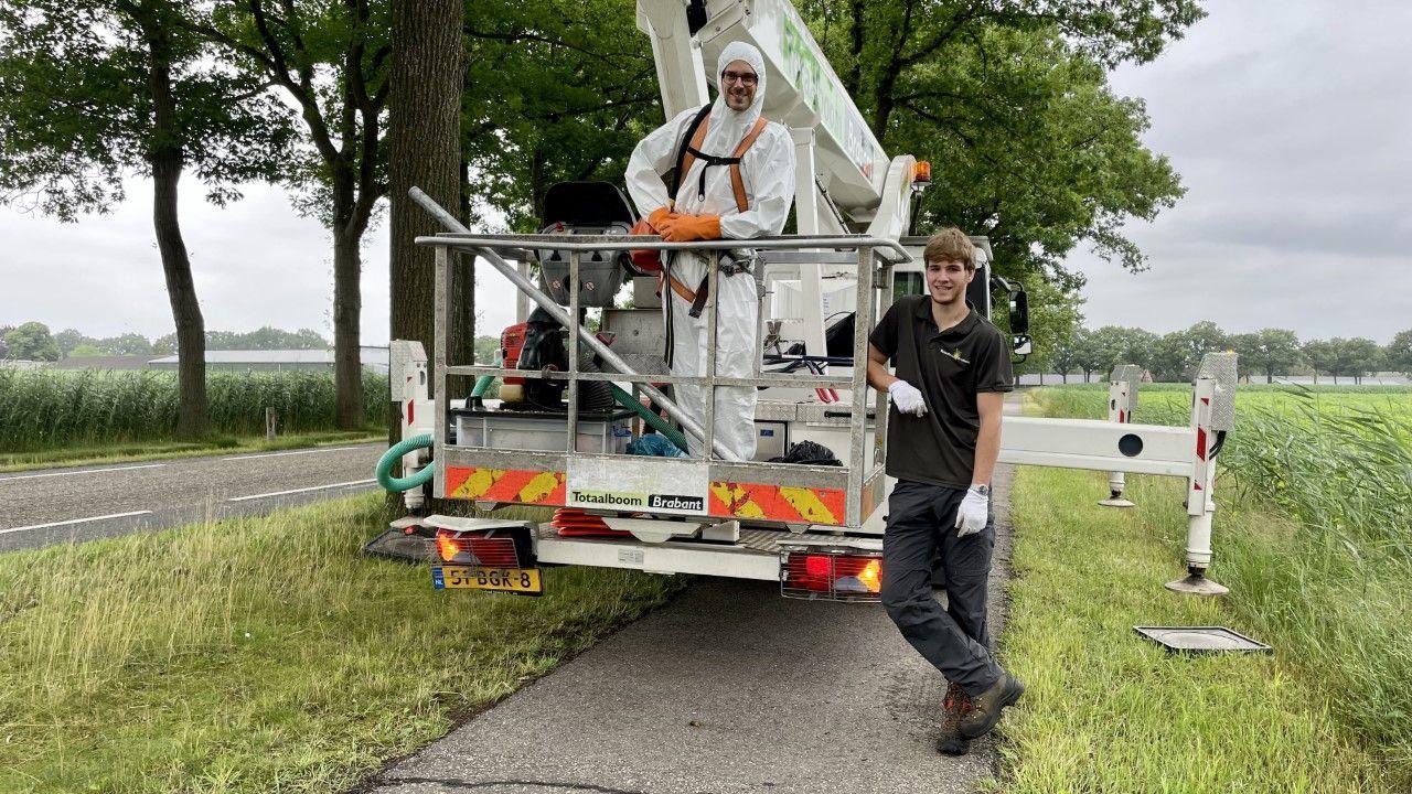 Joep en Joost bestrijden de eikenprocessierups: 'gekrab en gejeuk'
