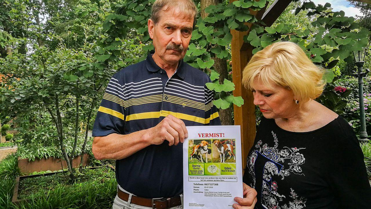 Adoptiehond Dorrie uit Spanje na twee dagen al zoek: 'Je blijft hoop houden'