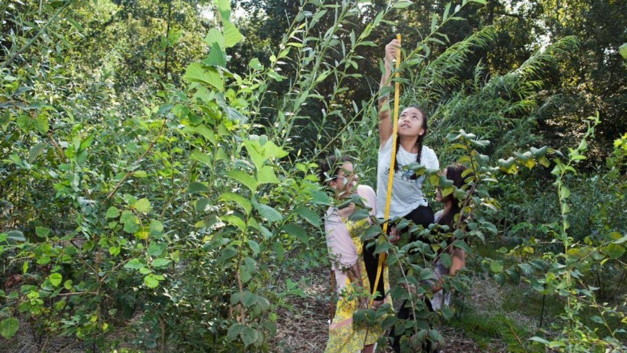 Oss zoekt naar nieuwe locatie Tiny Forest