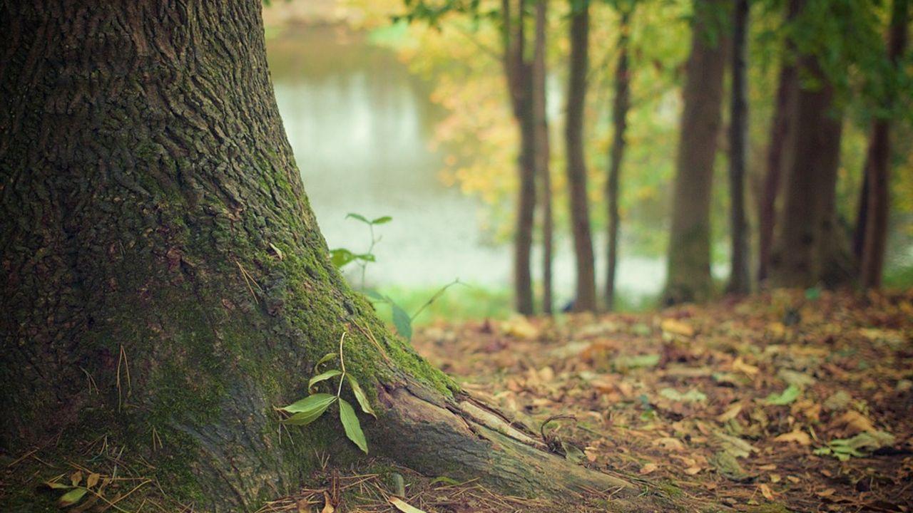 Bernheze brengt alle monumentale bomen in kaart