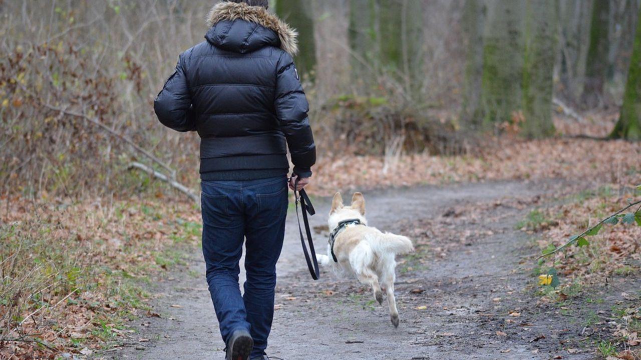 Wijkagenten waarschuwen Geffense hondenbezitters: Meldingen over gebakken spons en chocolade