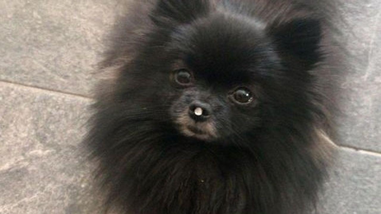 Hond Bliss vermoedelijk gestolen bij Udense vijver