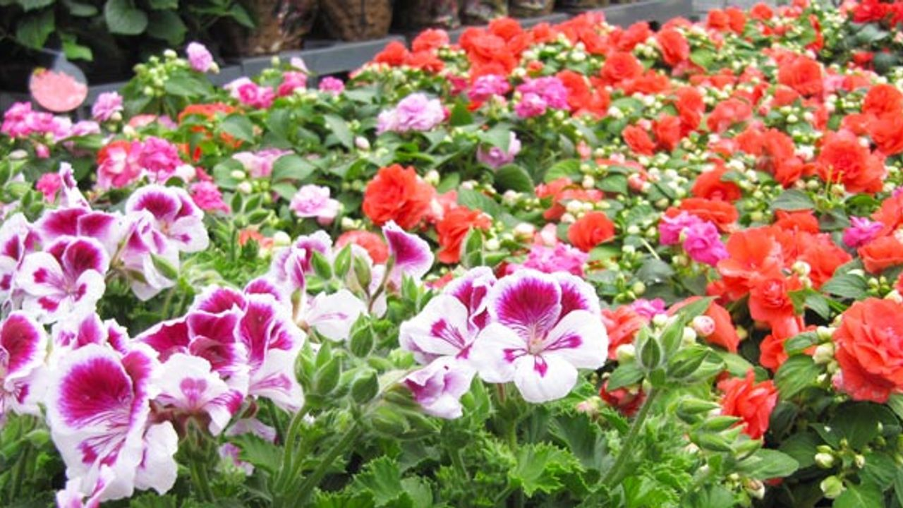 Facebookbericht roept verwarring op, gewoon bloemen en planten te koop op Osse markt