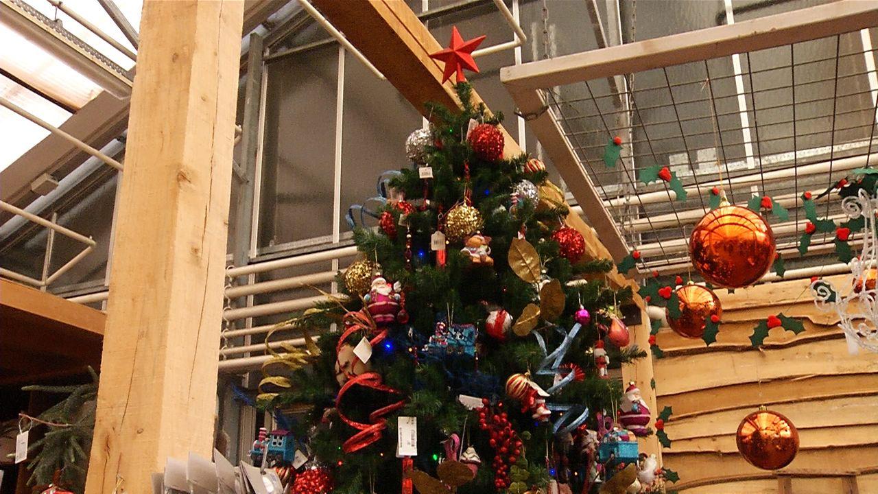 Kerstboomverkopers merken nu al vraag naar kerstbomen