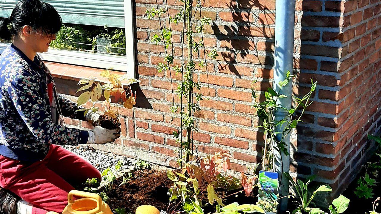 Den Bosch beloont tegelwippers met gratis planten en gratis rondje milieustraat
