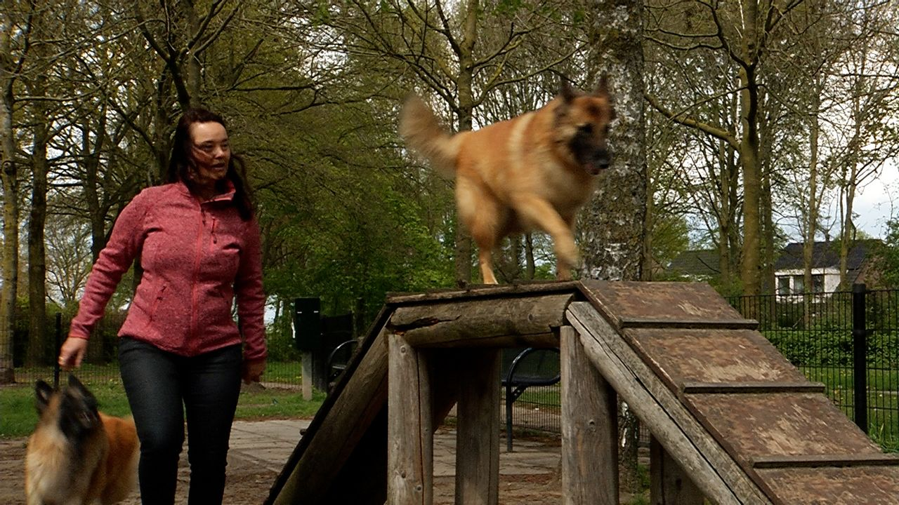Initiatiefnemer hondenspeeltuin Nistelrode krijgt nul op rekest