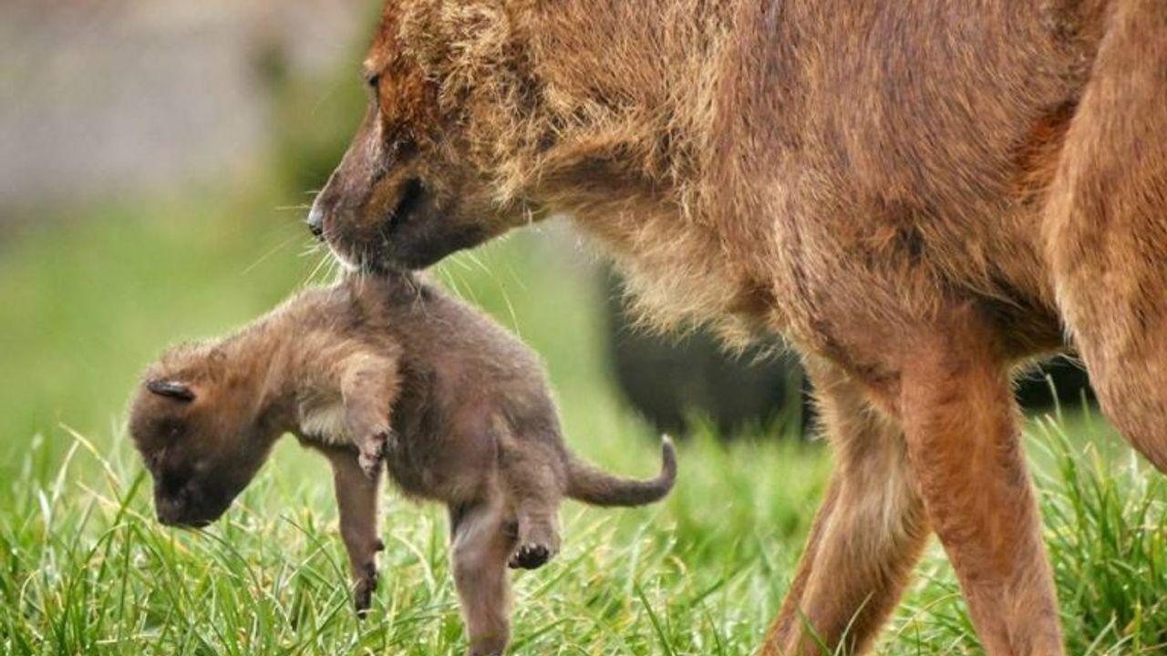 Dierenpark Zie-Zoo na twee maanden weer open