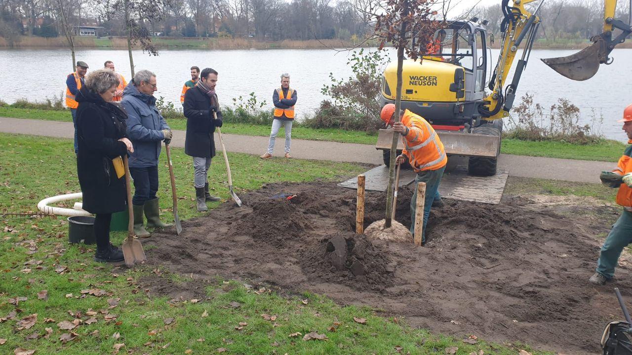 Bewoners van Muntel/Vliert willen extra bomen en dus krijgen ze 73 nieuwe van de gemeente