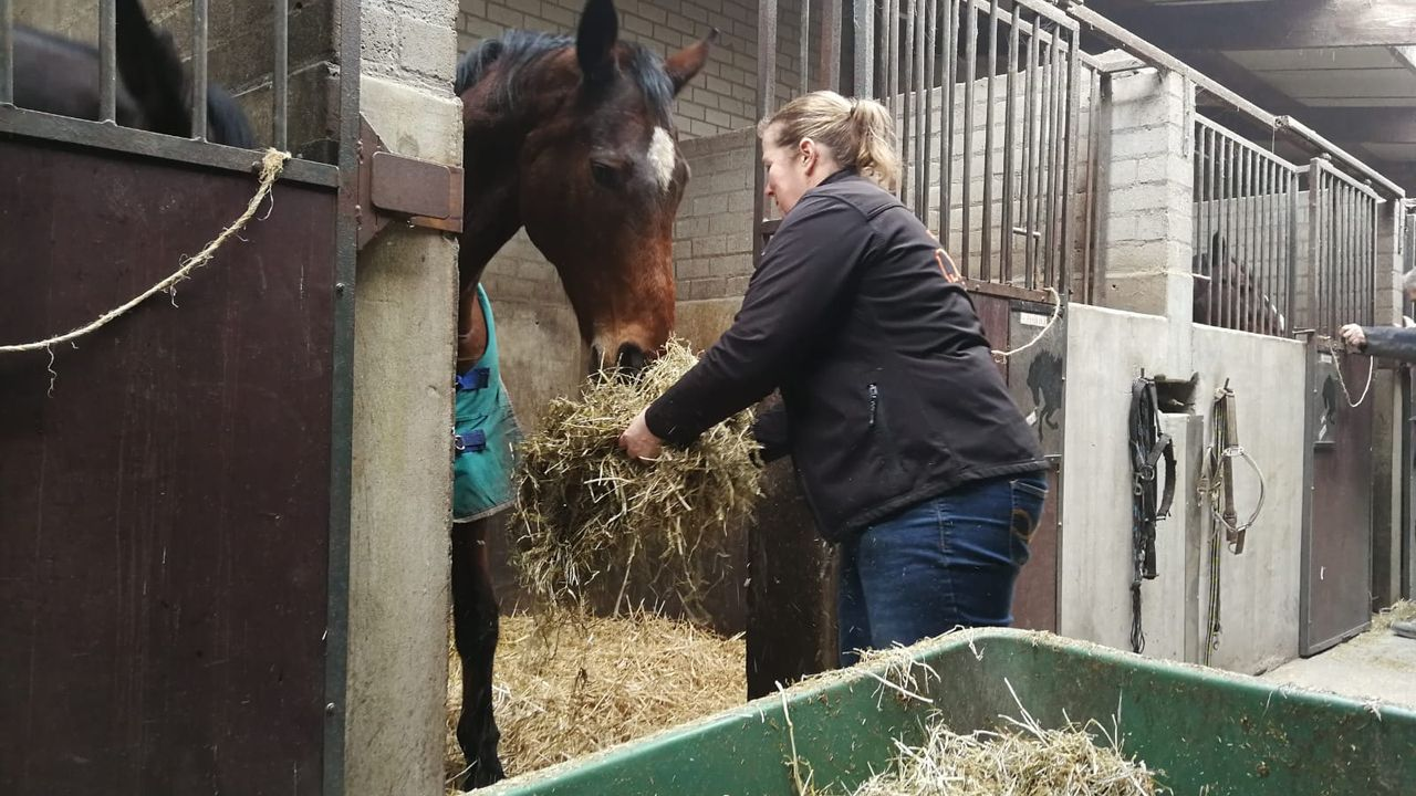 Paardenliefhebbers uit de regio maken zich zorgen om dodelijk virus