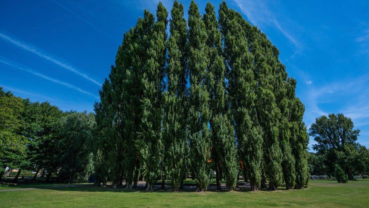 Boulevard krijgt festivalhart in Zuiderpark en gaat langer duren