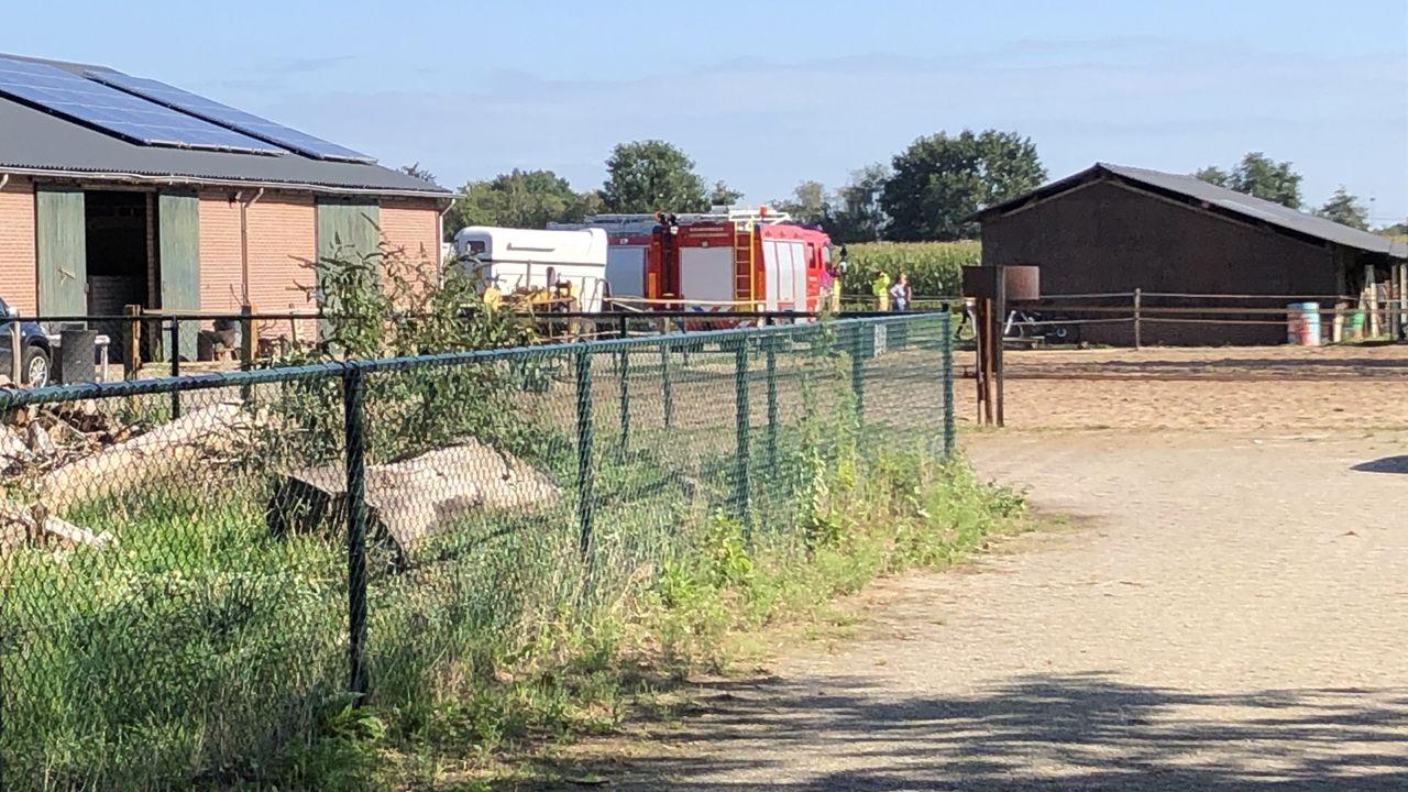 Veulen in put gevallen in Sint-Oedenrode