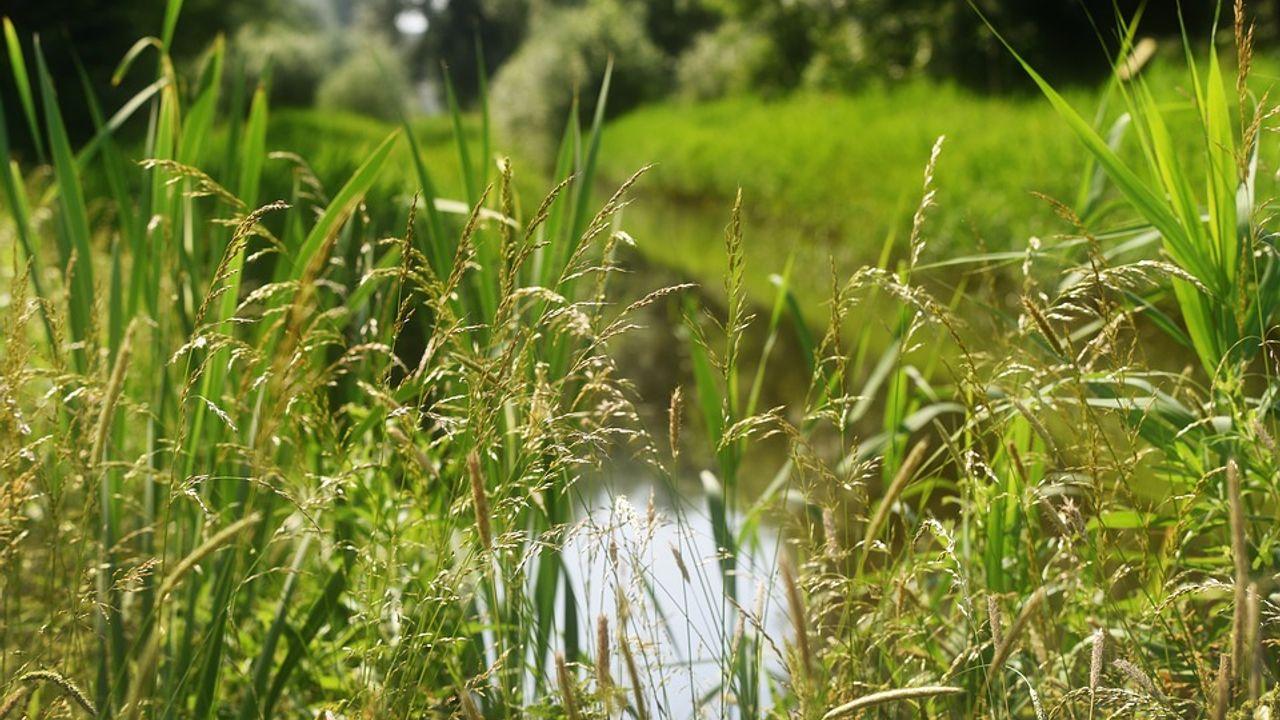 Waterschap Aa en Maas gestart met nieuwe maaironde