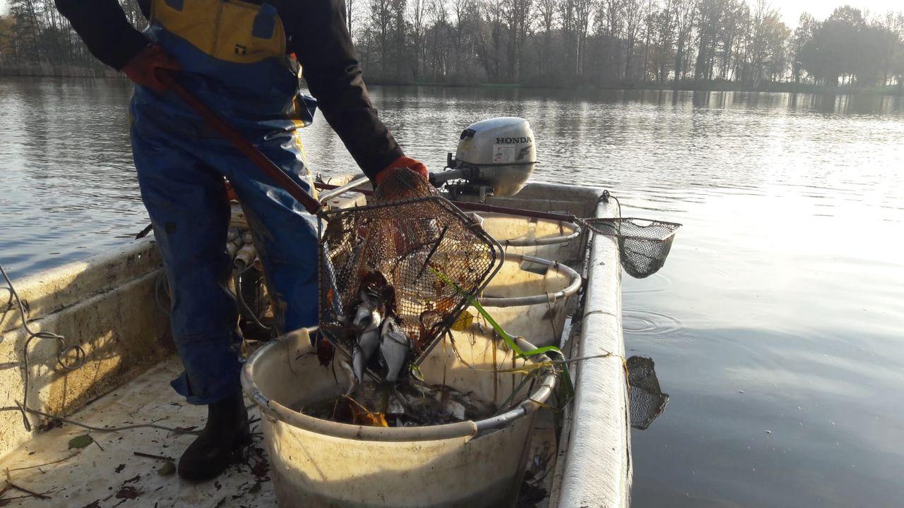 Vissen in vijver Hamelspoelweg verplaatst naar Hertogswetering