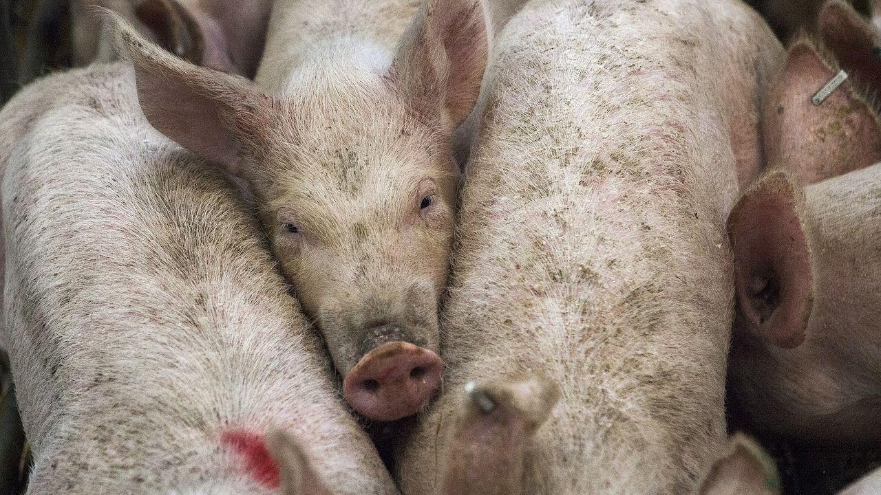 Inwoners van Erp en Zeeland dagvaarden Nederlandse overheid om stankoverlast veehouderijen