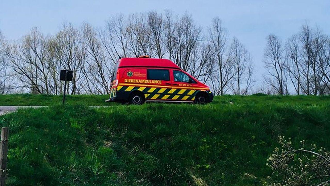 Dierenambulance Den Bosch vanaf juni 24 uur bereikbaar