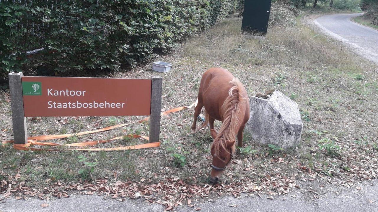 Loslopende pony weer terug bij eigenaar