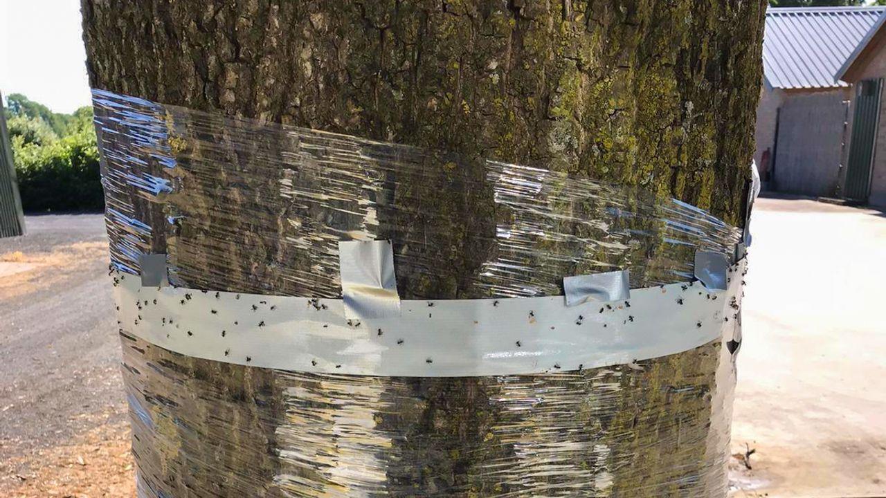 Uden roept bewoners op: stop met bestrijden eikenprocessierups met plastic