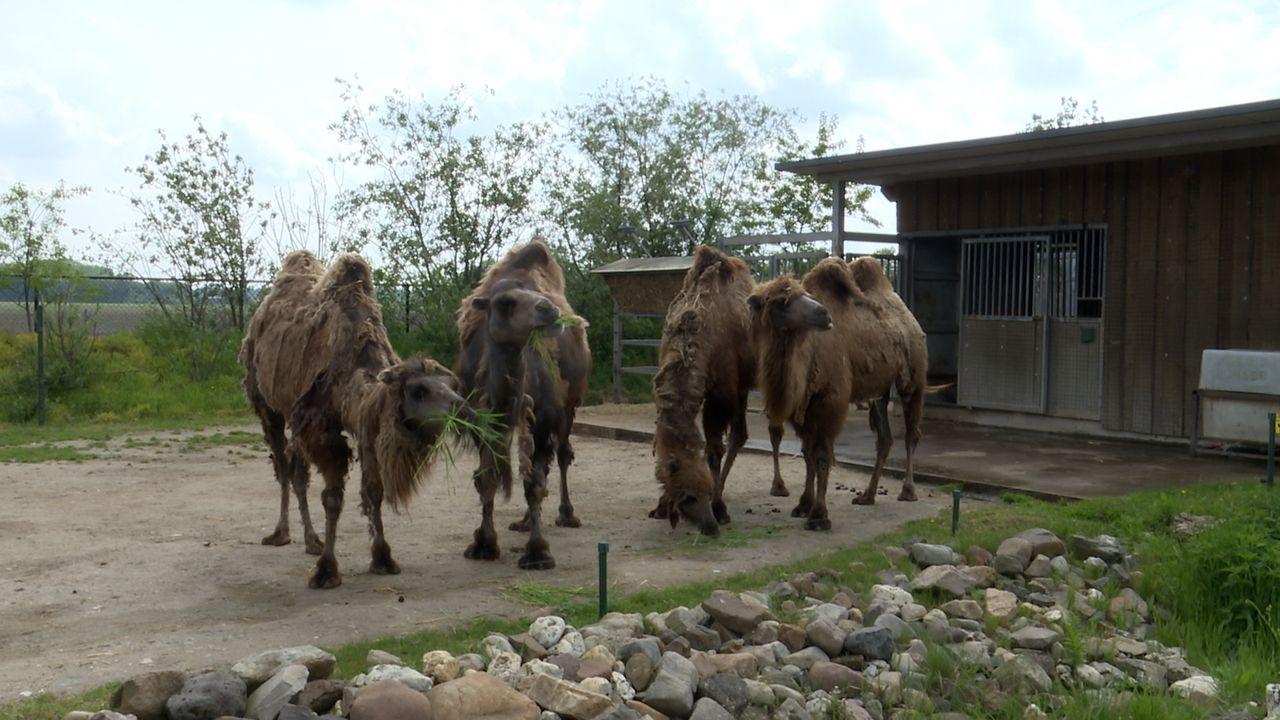 Dierenpark Zie-Zoo kijkt uit naar opening; 'Eindelijk!'