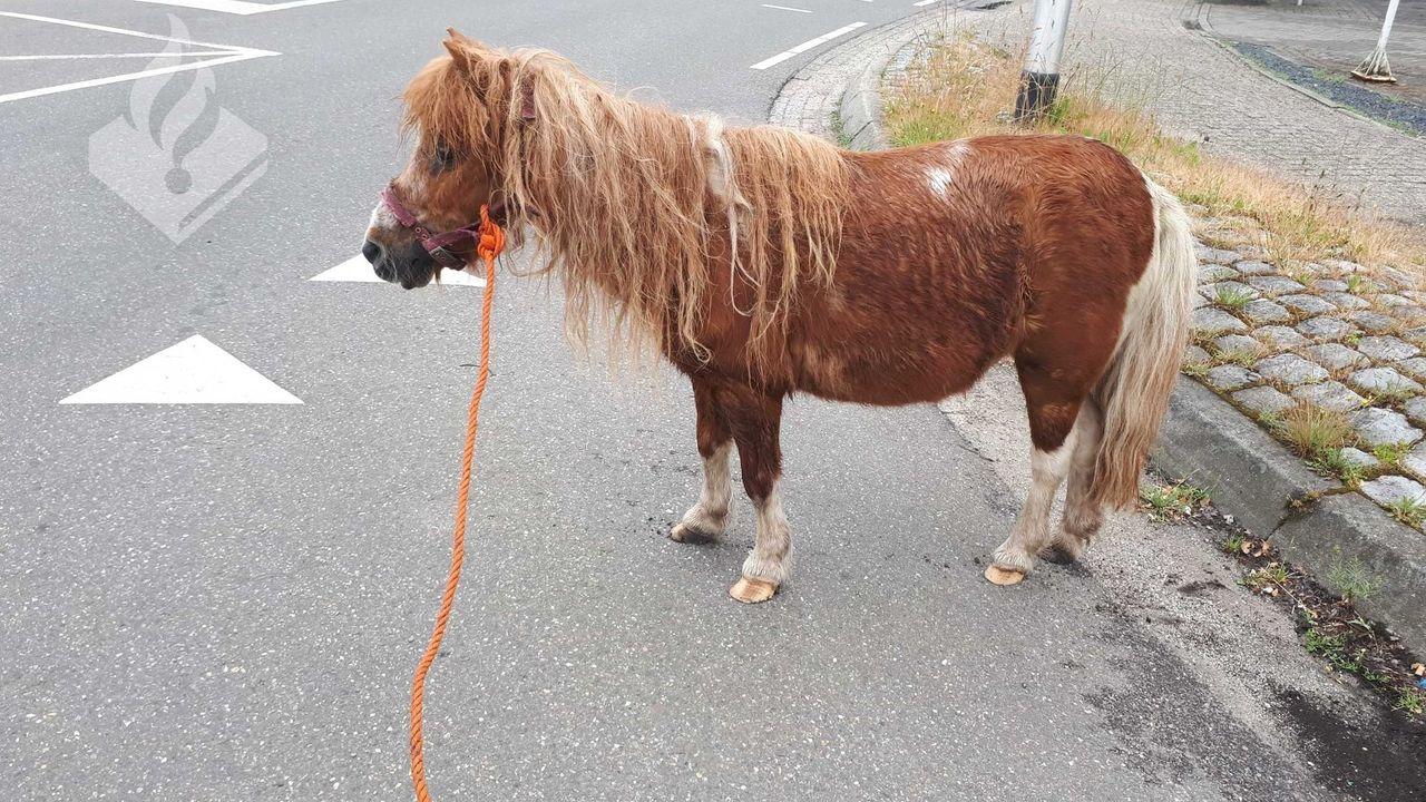 Loslopende pony in Schaijk weer terug bij baasje