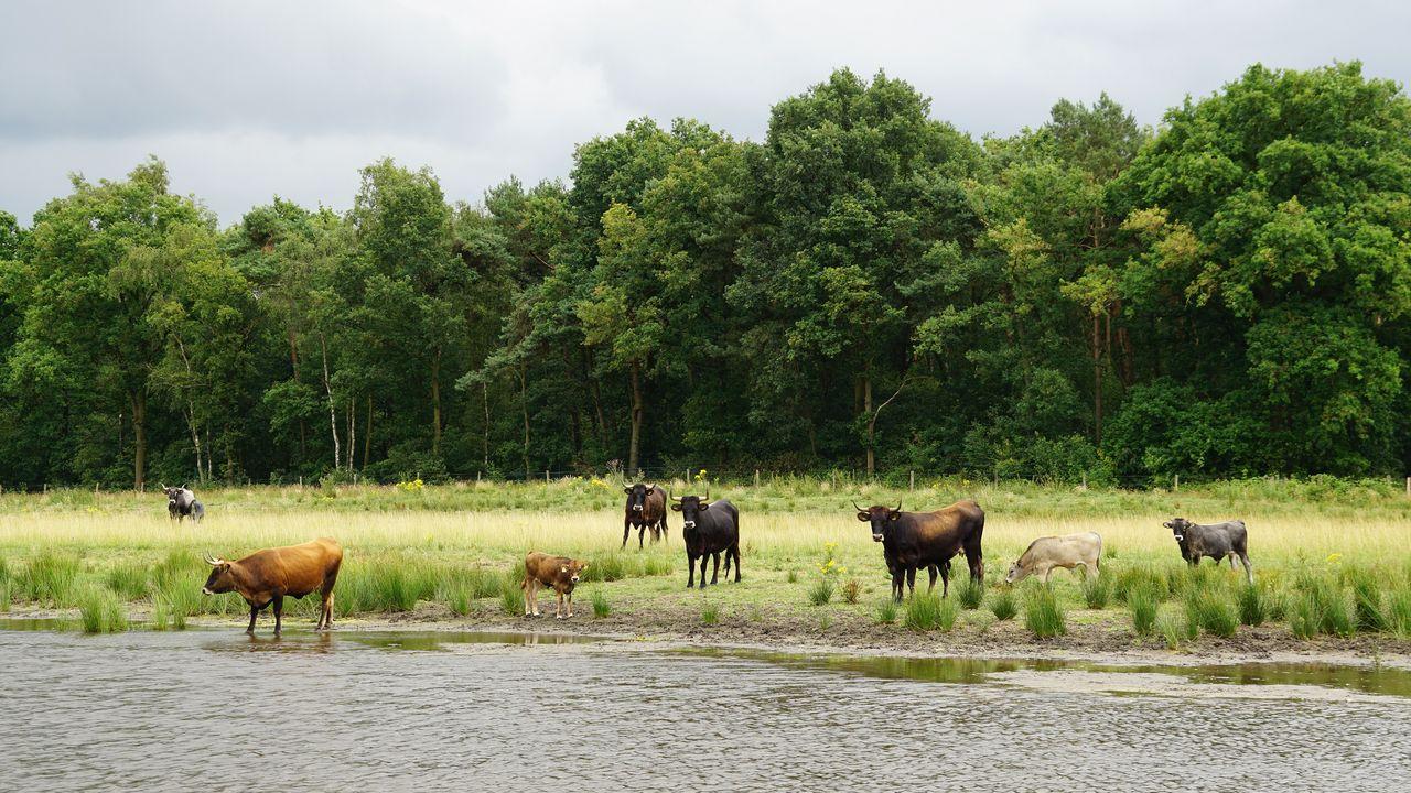Informatieavond over veiligheidsmaatregelen natuurgebied De Maashorst