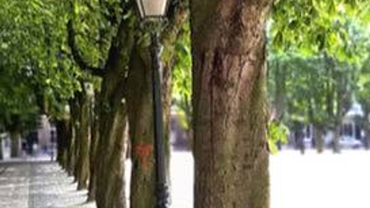 Behoud kastanjebomen op Parade onzeker na omvallen boom, gemeente doet onderzoek