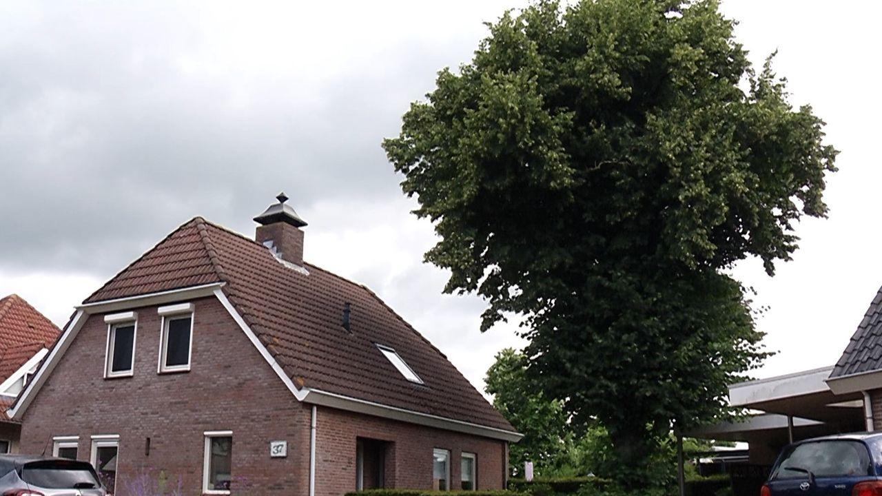 100-jarige monumentale lindeboom in Geffen wordt gekapt