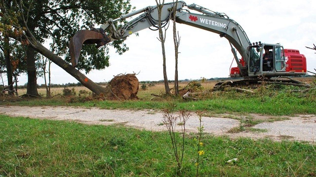 Onderwaterleven in de Maas krijgt zetje door dode bomen