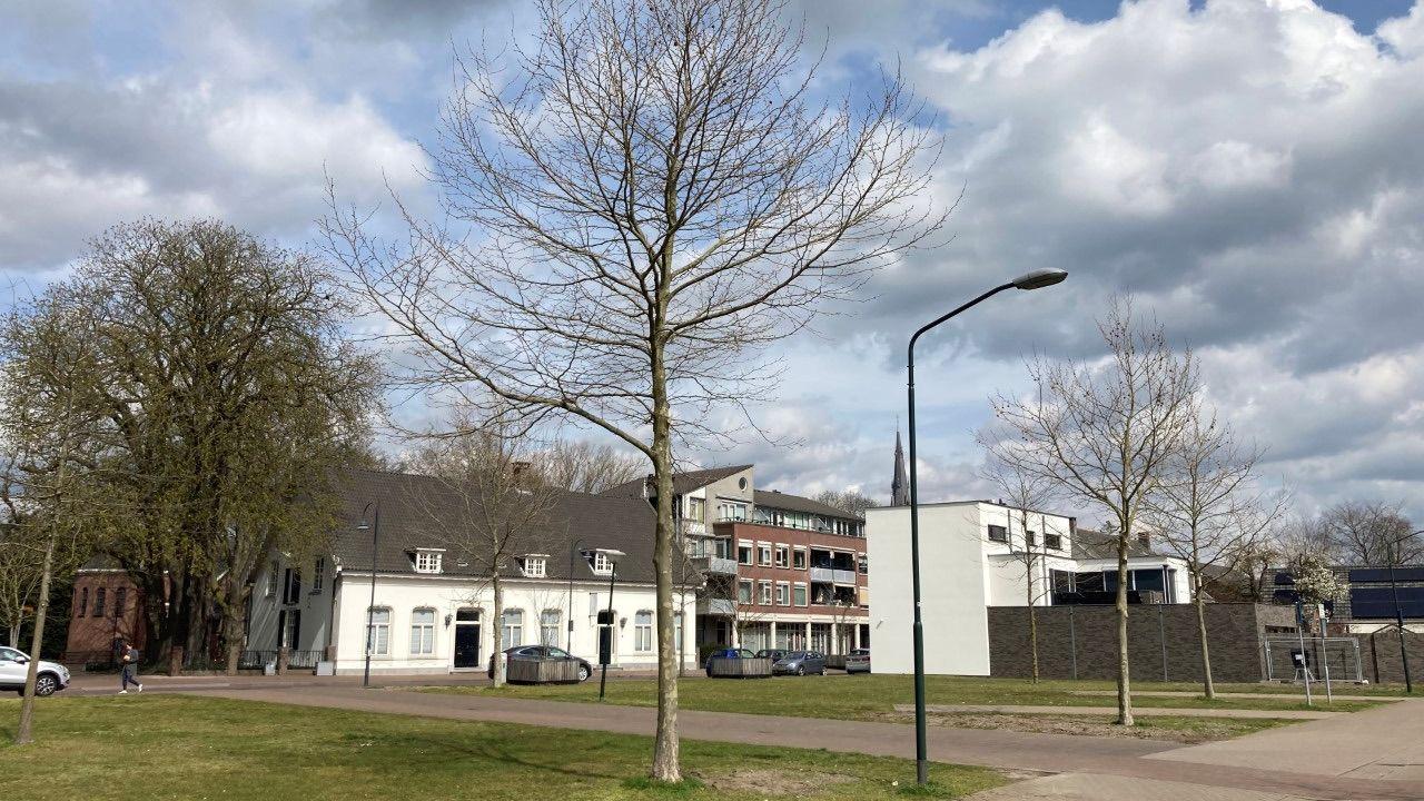 Bomen in Veghel gaan op transport
