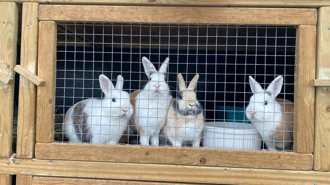 Steeds meer konijnen gedumpt bij konijnenopvang in Schaijk: 'we gebruiken elke centimeter'