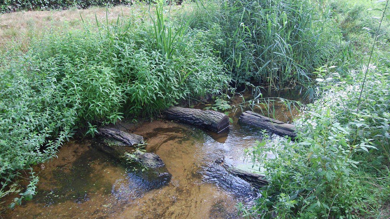 Waterschap 'zet de kraan dicht' naar een aantal beken