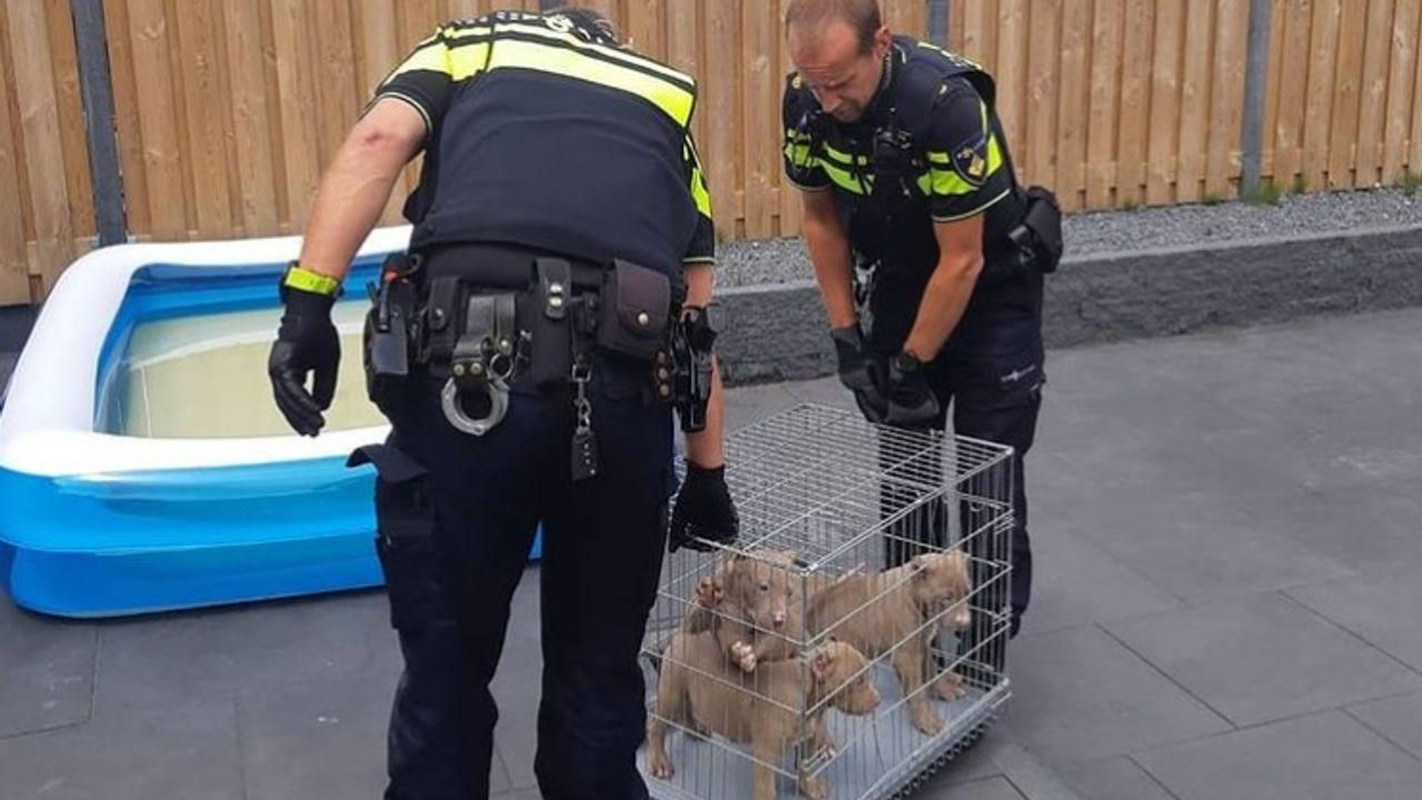 Politie neemt zeven pups in beslag vanwege afgeknipte oortjes
