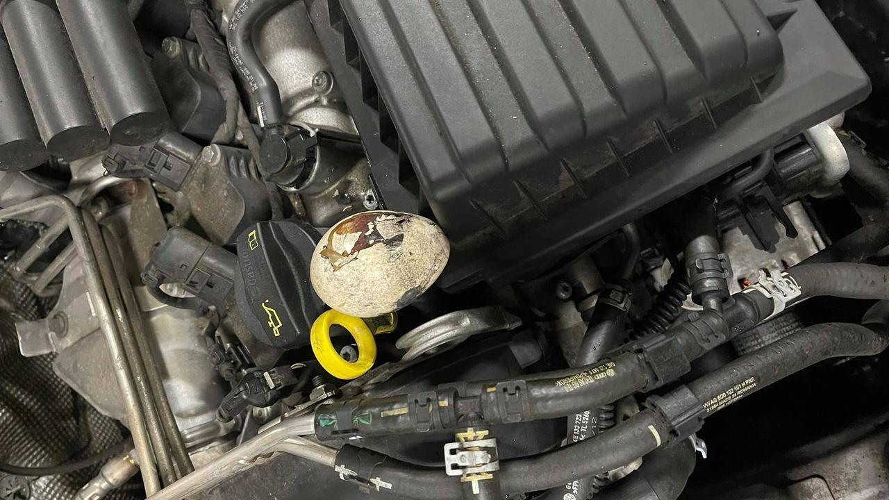 Hoe komen er eieren en stukken brood onder de motorkap van auto's in onder meer Berghem en Oss?
