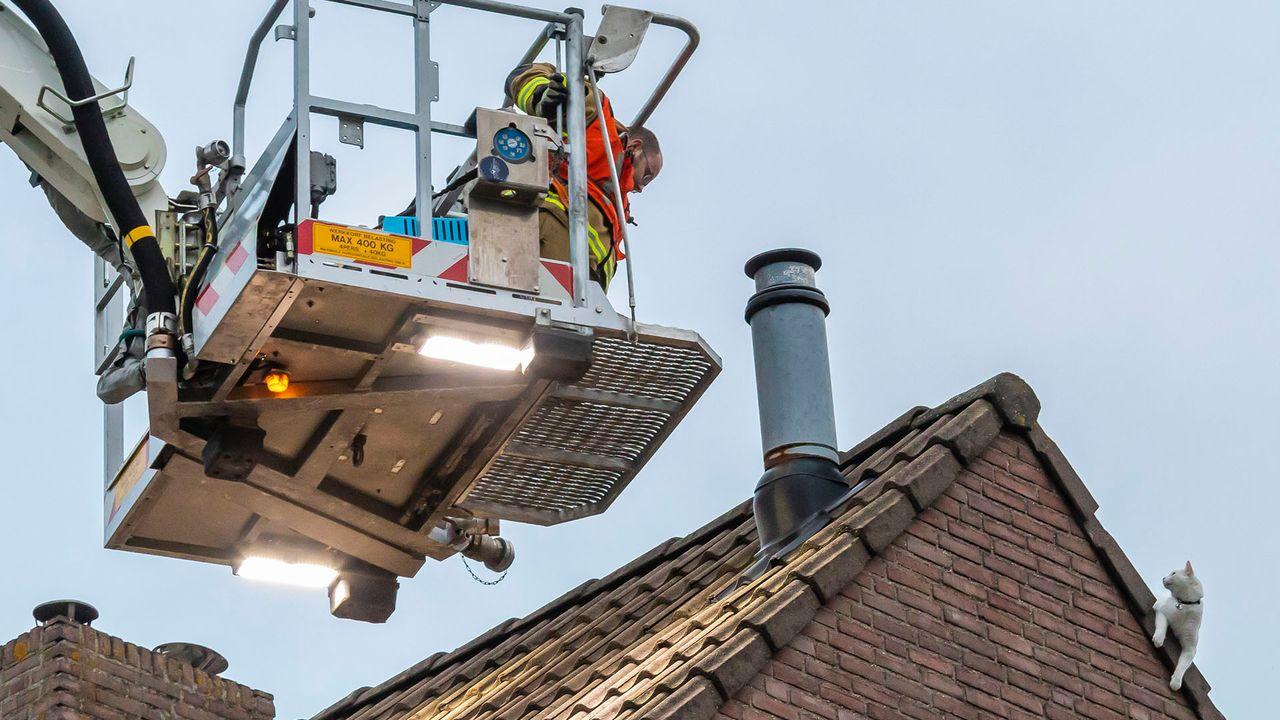 Brandweer redt bange kat van dak in Oss