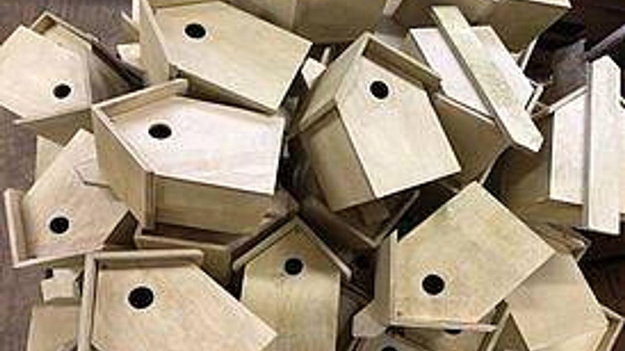 Gemeente Den Bosch deelt duizend nestkasten uit om eikenprocessierupsen te bestrijden