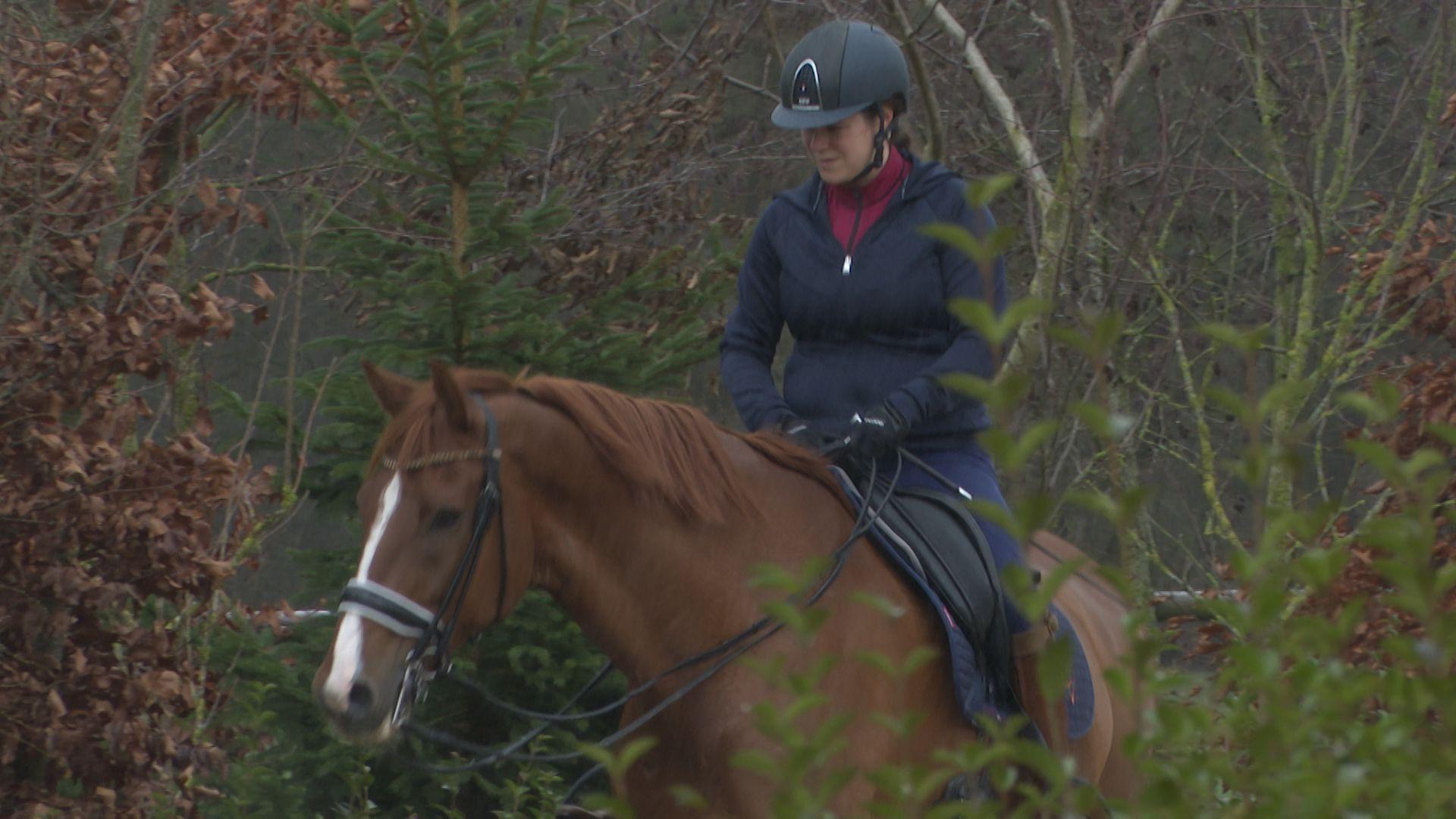paard sanne voets 2.jpg