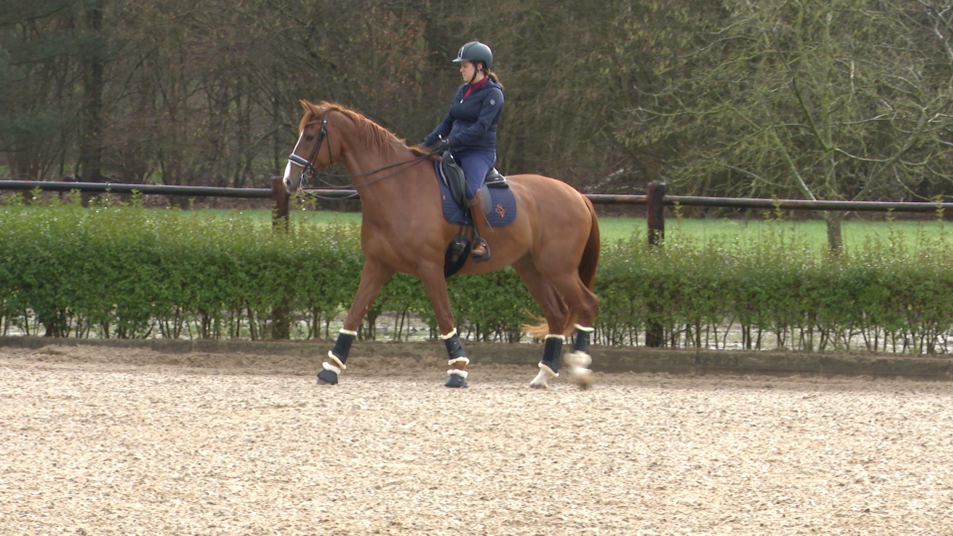 sanne voets op haar paard.jpg