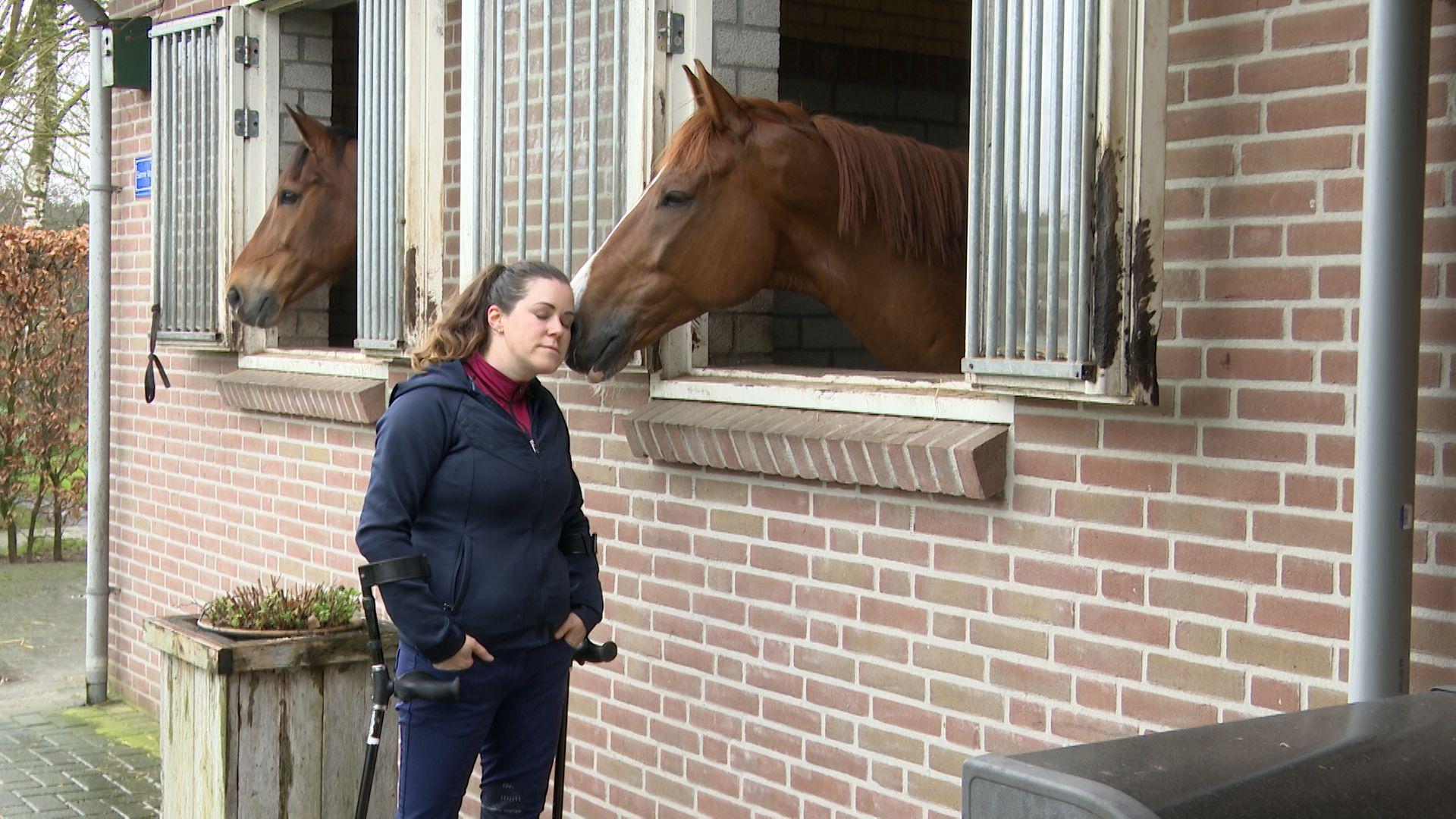 knuffel met paard.jpg