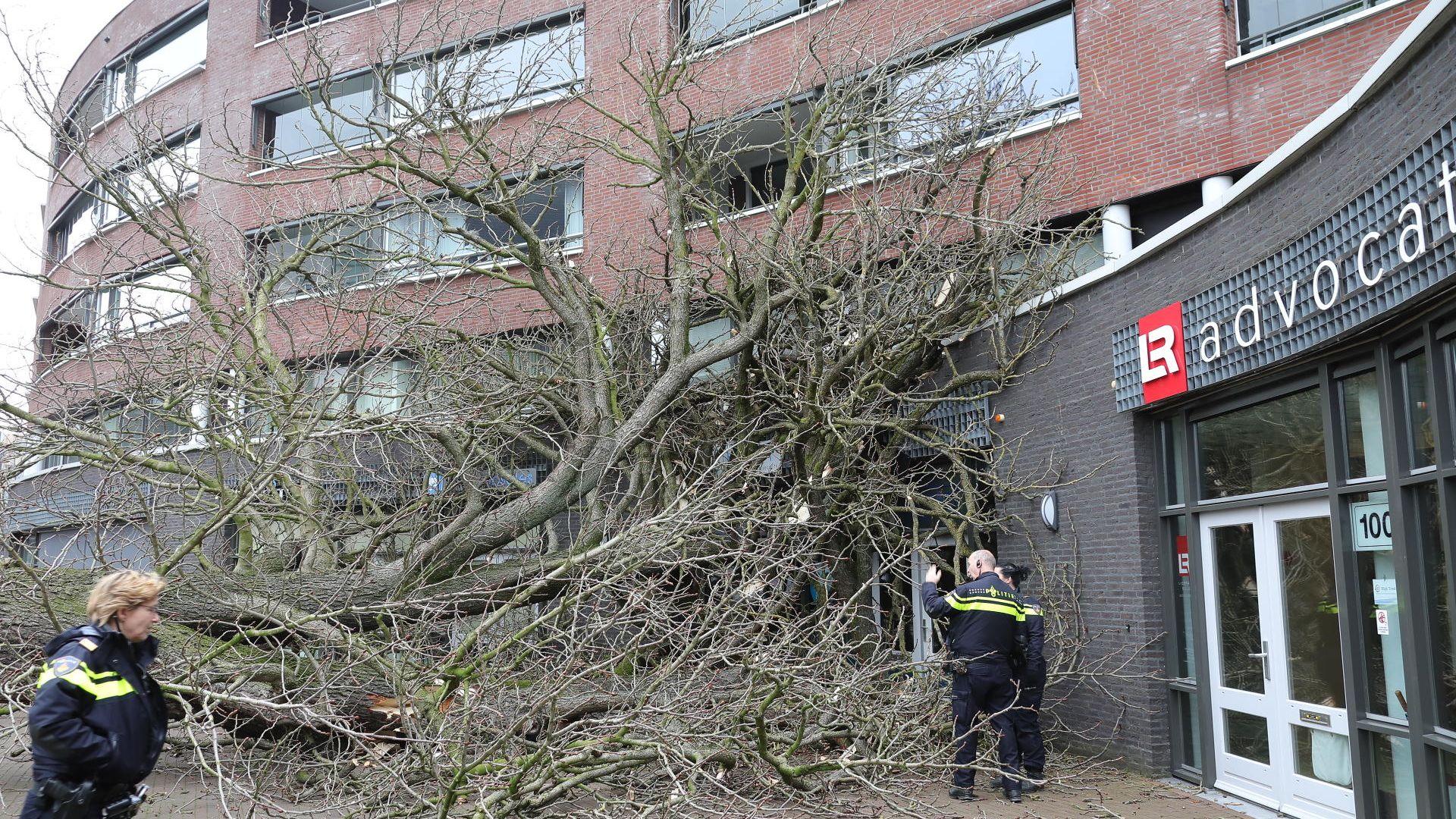 boom tegen gebouw2.jpg