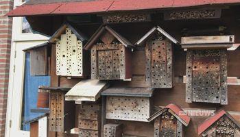 Nationale bijentelling in bijenrijk Brabant; 'We zijn echt aan het afbouwen'